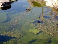 <h2>Fish Pond </h2><p>Fish sleeping in pond.<br></p>