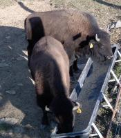 <h2>Bison 10