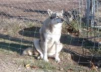<h2>Coyote Hybrid 1