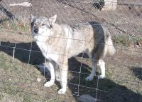 <h2>Coyote Hybrid 2