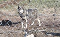 <h2>Coyote Hybrid 5