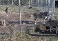 <h2>Coyote Hybrids 3