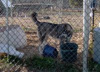 <h2>Wolf Hybrid 2