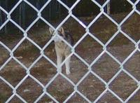 <h2>Wolf Hybrid 3