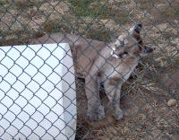 <h2>Puma 1