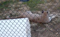 <h2>Puma 2