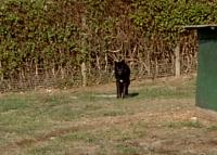 <h2>Black Wolf 1