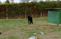 <h2>Black Wolf 4
