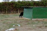 <h2>Black Wolf 5