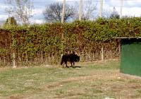 <h2>Black Wolf 8