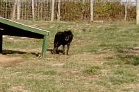 <h2>Black Wolf 9