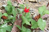 <h2>Red Flower at Yahoo Falls 1