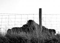 <h2></h2><p>Photography by WahiyaJune 27, 2008Midway, KY<br></p>