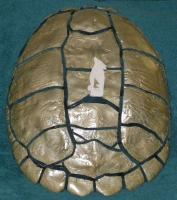 <h2>Turtle Shell Shield </h2><p>Privately Owned<br></p>